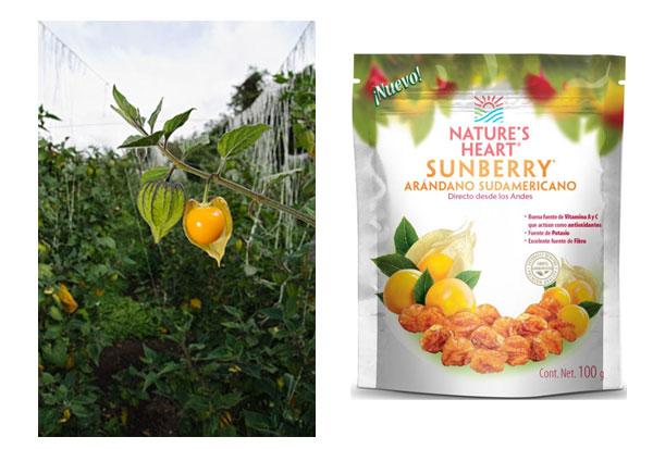 sunberries1