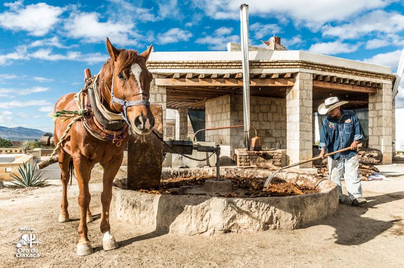 Casa-Mezcal-Oro-de-Oaxaca